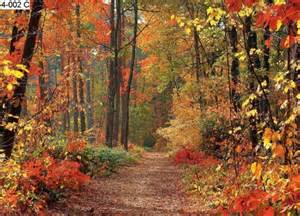 Autumn Forest Wall Mural Autumn Graphics Picture Autumn Forest Wall Mural
