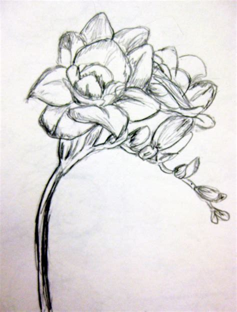 freesia tattoo designs freesia sketch artwork sketches