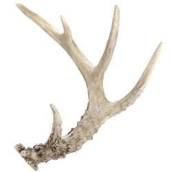 Mule Deer Antler Chandelier Antler Bing Images