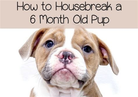 housebreak puppy housebreaking a 6 month puppy