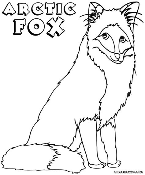 pin red fox colouring pages on pinterest