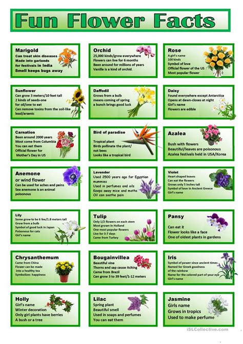facts about flowers flower facts cards worksheet free esl printable