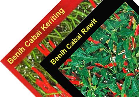 Bibit Cabe Rawit harga jual harga bibit cabe rawit benih cabai rawit