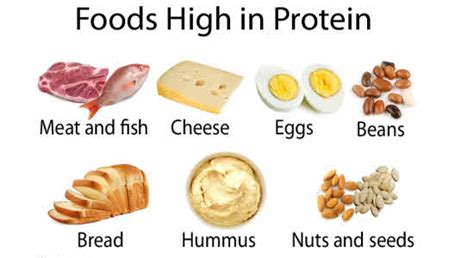 protein enriched foods food high in protein eat protein rich foods increasing the