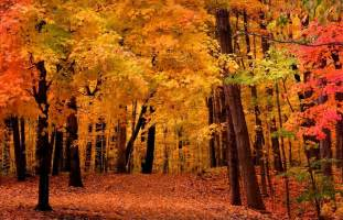 what are fall colors sanborn orthodontics fall is in the air at sanborn