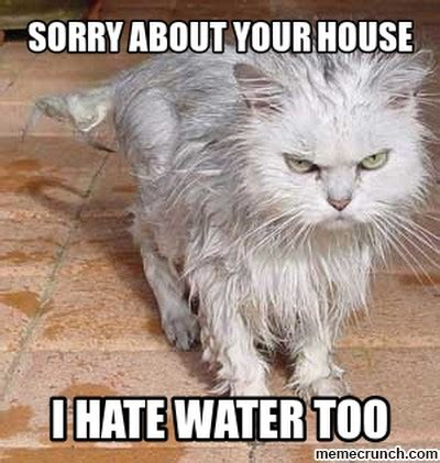 Wet Cat Meme - angry wet cat