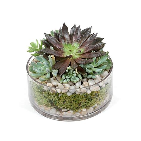 succulent dish succulent and plant delivery nyc plantshed com