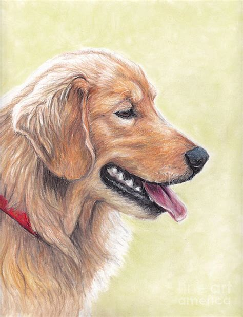 drawings of golden retrievers golden retriever profile drawing by yealey