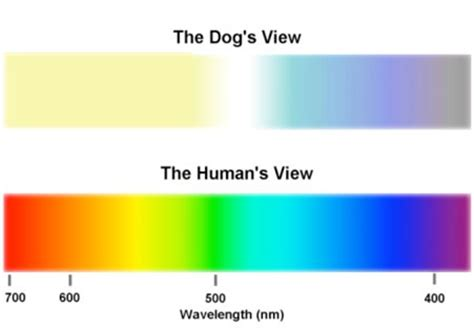 why are dogs colorblind how does a blind person see the world what do blind see exactly what