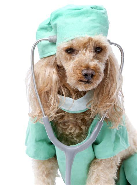 puppy scrubs scrubs related keywords suggestions scrubs keywords