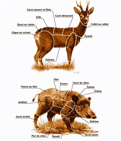 comment cuisiner une 駱aule de sanglier morceaux grand gibier et conservation