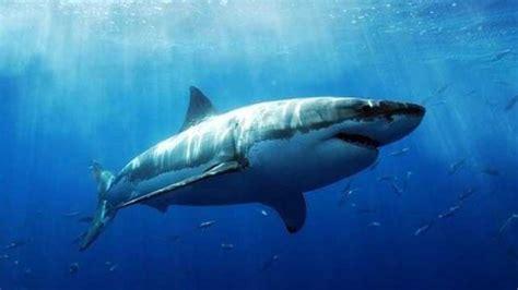shark explore