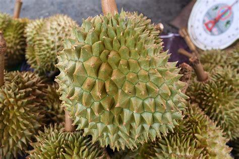 stink  durian fruit delays flight  indonesia
