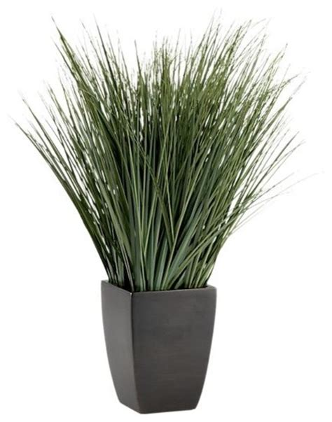 potted onion grass modern plants by crate barrel