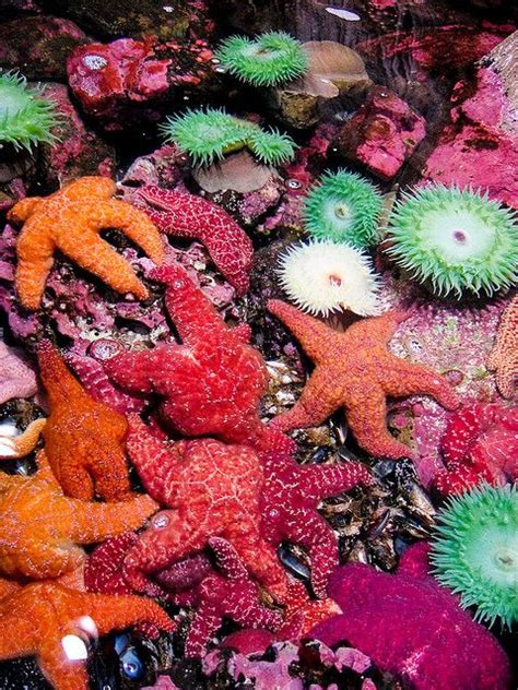 starfish colors snorkeling for starfish every color of the rainbow so