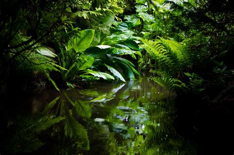 amazon jungle tropical rainforest get to sleep fast best amazon rainforest relaxation