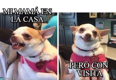 Memes De Chihuahua - mi mam 225 en la casa chihuahua enojado y feliz meme en memegen