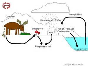 phosphorus cycle worksheet tecnologialinstante