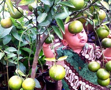 Jual Cermin Hias Semarang jual tanaman hias semarang tanamanbaru