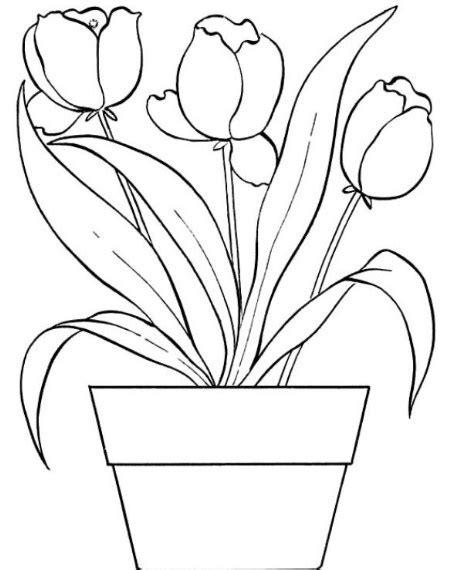 sketsa gambar bunga matahari hitam putih koleksi gambar