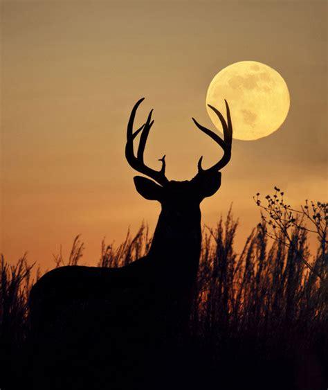 here comes the buck moon usatodaycom may full moon flower deer moon sabbats and sabbaths