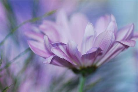 light purple flowers image flowers in bloom green light purple flower jpg