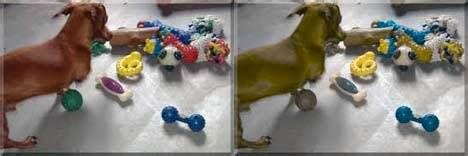 why are dogs color blind are dogs colour blind quora