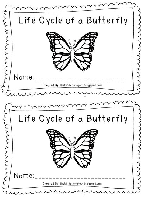 coloring pages butterfly life cycle free coloring pages of life cycle of a butterfly