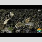 Bristle Worm Trap | 480 x 360 jpeg 25kB