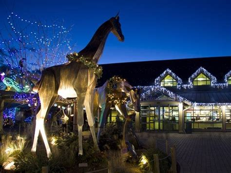 denver zoo lights tickets debbie s deals zoo lights offers package deal with
