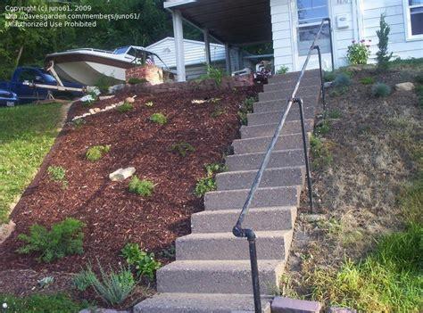 beginner gardening mulching a hill 1 by juno61