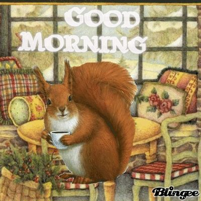good morning squirrel pictures   images  facebook tumblr pinterest  twitter