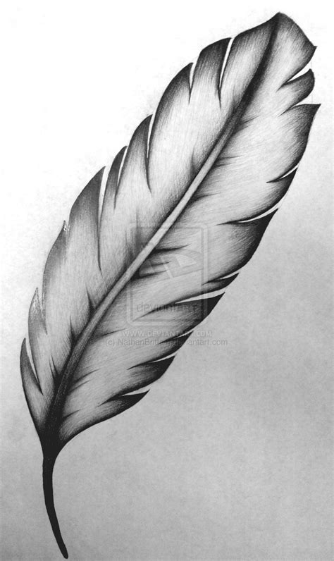 white feather tattoo designs feather dove pencil and in color feather dove