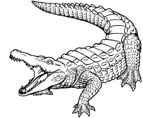 alligator coloring page pdf crocodile coloring page506134 crocodile coloring pages