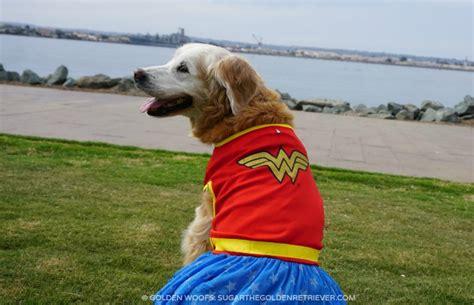 golden retriever costume for baby 100 golden retriever costumes costumes favorite pups 24th annual