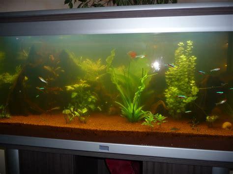 aquarium design eau chaude eau trouble aquarium eau chaude 28 images eau tr 232 s