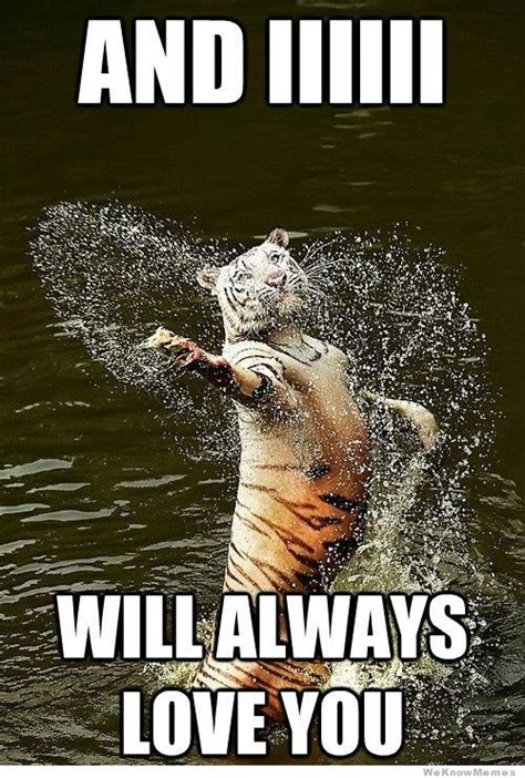 Romantic Meme - romantic tiger weknowmemes
