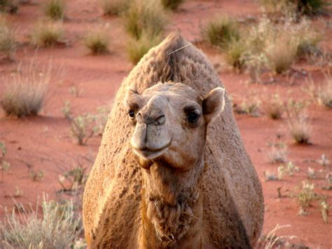 Finding In Australia 10 Awesome Animals You Don T Expect To Find In Australia 7 Cups Forum