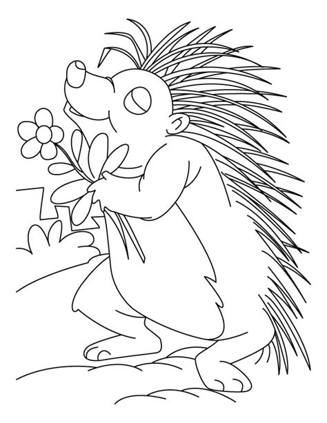 flower loving porcupine coloring pages download free