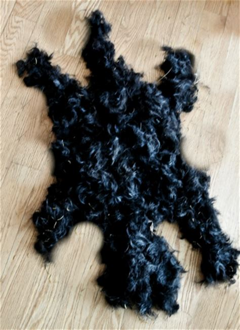 hair cuts for a scottish terrier yorkshire terrier haircut styles