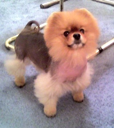 pattern hair loss in dogs another hairy tale bay cities animal hospital