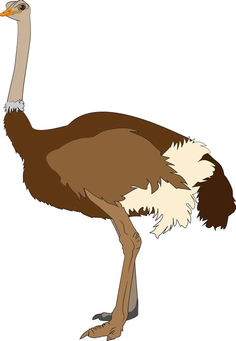 ostrich clipart ostrich vector clipart image free stock photo