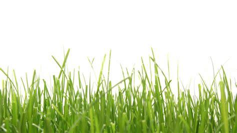 eingangstüren größe 12 3261 wachsendes gras team gsb