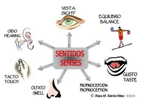 que son imagenes sensoriales olfativas los receptores sensoriales