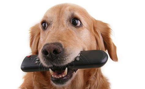 puppy tv how to stop your stealing the happy puppy site