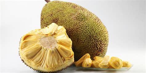 nutrisi sehat yang terkandung dalam buah nangka info unik lucu menarik dp bbm