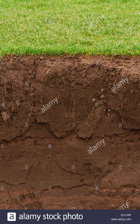 Soil Cross Section by Cross Section Of A Grass Lawn With Exposed Soil Below Stock Photo Royalty Free Image 44037162