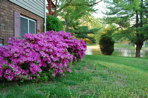 shrubs with flowers some type of flowering bush photography forum