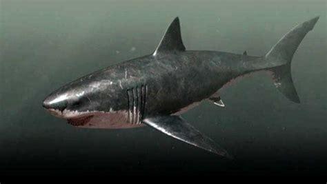 submarino el tiburn asesino megalodon 191 es posible que todav 237 a exista frente a las