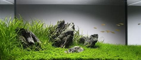 tutorial aquascape step  step cm nature aquarium tank